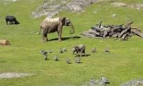 IMAGE: Have You Seen This? Baby elephant chasing birds is delightful
