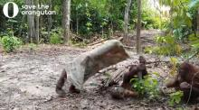IMAGE: Have You Seen This? Orangutan dresses up like a ghost to make some friends