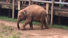 IMAGE: Have You Seen This? Baby elephant tries on human sandal