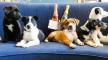 IMAGE: You Can Have Puppies And Prosecco Delivered To Your Room At This Hotel