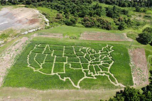 This Virginia Farm Has A Corn Maze Shaped Like The U.S. (Simplemost Photo)