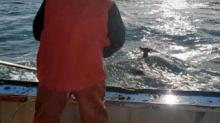 IMAGE: This Lobster Boat Saved A Helpless Deer That Drifted 5 Miles Offshore