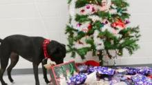 IMAGE: This Video Of Shelter Dogs Picking Out Their Own Presents Will Melt Your Heart