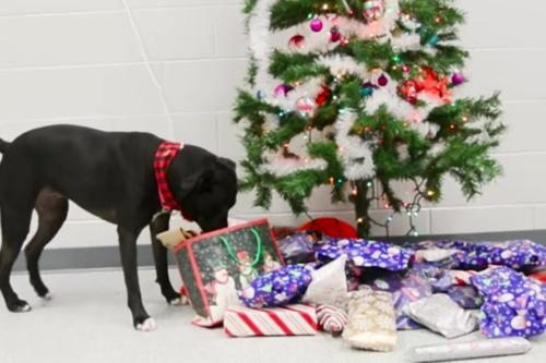 This Video Of Shelter Dogs Picking Out Their Own Presents Will Melt Your Heart (Simplemost Photo)