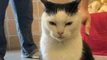 IMAGE: The 'world's Worst Cat' Is Seeking Her Forever Home