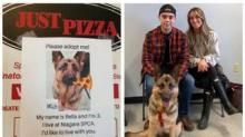 IMAGE: Pizza Shop Is Putting Photos Of Adoptable Dogs On Its Pizza Boxes