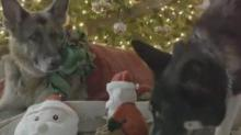 IMAGE: Joe Biden's Dogs Wish America A Merry Christmas In This Cute Video