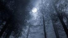 IMAGE: The Wolf Moon: The First Full Moon Of The Year Is Coming At The End Of January