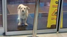 IMAGE: Dog Spent 6 Days Outside A Hospital Waiting For His Sick Owner