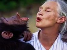 Jane Goodall moves primate research records to Duke