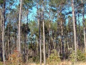 The 79,000-acre Hofmann Forest in Jones and Onslow counties is the largest university-owned teaching and research forest in the world.