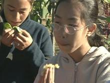 Edible schoolyard teaches valuable lessons