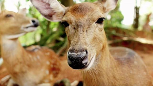 Hunter dies in Arkansas after deer he shot attacks him