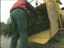 Waste Management Wrapping Up Christmas Trash
