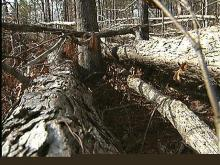 Downed Trees Fuel Fears of Fires