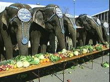 Performing Pachyderms Beef Up for Big Top