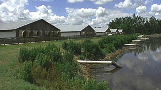 Hog farms are a big environmental concern for Neuse River advocates