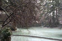 Snow began sticking to the tress and grass in the WRAL Gardens at about 8:30 a.m. Snow could continue into the afternoon and accumulate one to three inches. (WRAL OnLine)