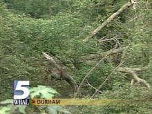 Fallen trees are found in and around many streams (WRAL-TV5 News)
