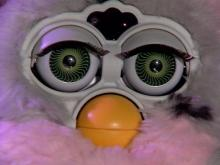 Furby Fever Heats Up In Triangle