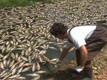 Dry Weather to Blame for Johnston County Fish Kill