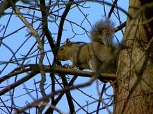City of Durham Goes Nuts Over Squirrels
