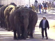 Powerful Pachyderms Parade Through Raleigh