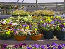 Sunny Weather Inspires Spring Planting
