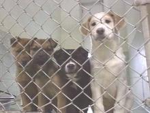 Moore County Animal Shelter Running Out Of Room