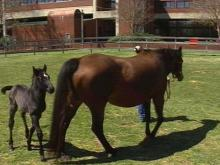 NCSU Vet School Holds Open House This Weekend