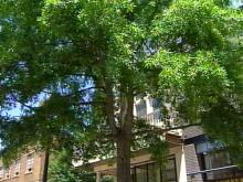 Fayetteville May Uproot Trees to Create More Parking Downtown