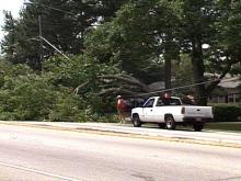 Western Boulevard motorists faced a leafy obstacle Sunday afternoon.(WRAL-TV5 News)