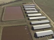 World's Largest Hog Producer Agrees to Phase Out Lagoons
