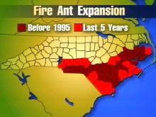 The ants used to be common in the southern part of the state, and since 1995, they have been spreading. The insects have moved as far north as Johnston, Wilson and Edgecombe counties.(WRAL-TV5 News)