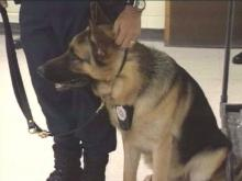 Thanks to several agencies, some small police departments and sheriff's office in North Carolina are adding K-9 cops like Rex to their force.(WRAL-TV5 News)