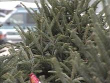 'Tis the season for Christmas trees. Taking a few steps can prevent a holiday tragedy.(WRAL-TV5 News)