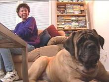 Zebulon Woman's Dog Goes From Pound Puppy To Hero