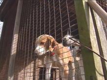 Dogs Are Becoming Casualties In Battle Between Deer Hunters