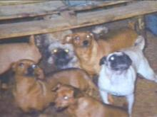 According to Lee County Animal Control, Barbara Woodley has more than 300 dogs and birds living inside and outside her home. Animal rights advocates say the city should do something.(WRAL-TV5 News)
