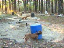 Lee County Authorities Bust Illegal Dogfighting Ring