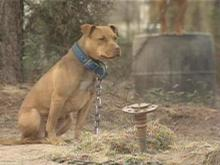 More than 150 dogs were confiscated in the Lee County raid.(WRAL-TV5 News)