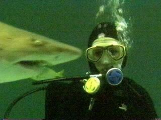 Amanda Shark