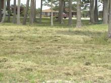 mayor's_grass