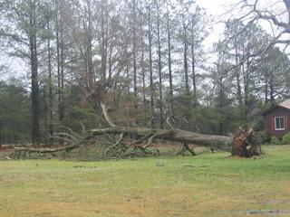 downed tree cary march 8 2005