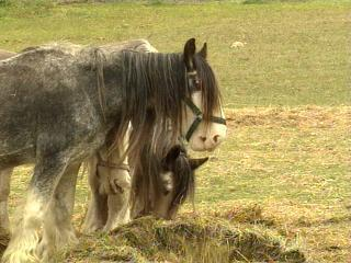 Pitt County Abused Horse