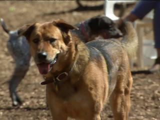 dogs, Millbrook dog park, Cary dog park