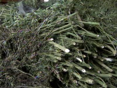 Duplin County Authorities Make 'Historic Marijuana Bust'