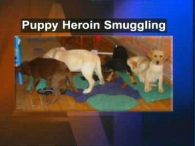 Puppy Heroin
