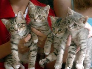 Winston-Salem Kittens