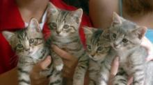 IMAGE: Kittens Arrive Special Delivery To Winston-Salem Family